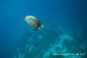 Photos_Marine_Life_Raja_Ampat